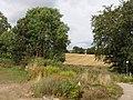 Barley field by Delgatie Castle - geograph.org.uk - 565906.jpg