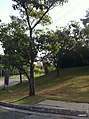 Barueri - SP - panoramio (6).jpg