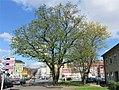 Baum am Märkischen Ring.JPG