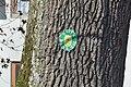 Baumgruppe (Eschenau) 010.jpg