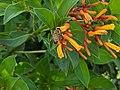 Bee and orange flower 3.jpg