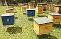 Beehives in Chkhorotsku.jpg