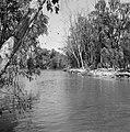 Begroeide oevers van de rivier de Yarkon, Bestanddeelnr 255-4820.jpg