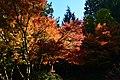 Bellevue Botanical Garden 22 - Yao Garden.jpg