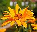 Berlins botaniska trädgård-IMG 8643.jpg