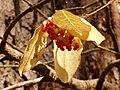 Berries PB250214.jpg