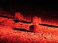 Bettongia penicillata (25136719827).jpg
