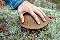 Big Mushroom! (15274674788).jpg