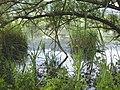 Biotopo Lago Pudro 01.jpg