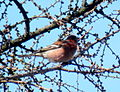 Birds14Slovakia8.JPG