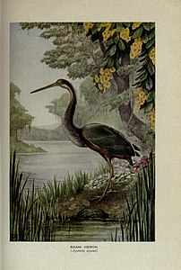 Birds of the world (Plate 2) (7050594647).jpg