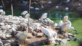Birds on a sunny day.jpg
