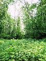Biryulyovskiy Forest Park.jpg