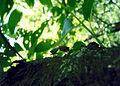 Black forrest daylight glowworms rendevous.jpg