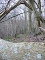 Blocked Path near Beech Farm - geograph.org.uk - 340134.jpg