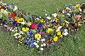 Blumenbeet Eremitage CIMG2493.JPG