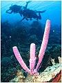 Bonaire 0935 (448942535).jpg
