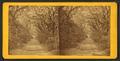 Bonaventure Cemetery, by Wilson & Havens.png