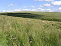 Border hill grazing - geograph.org.uk - 520621.jpg