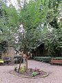 Borgo pinti, giardino del borgo 06.JPG