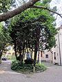 Borgo pinti 55, palazzina, giardino 15.JPG