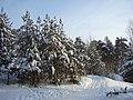 Borskiy r-n, Nizhegorodskaya oblast', Russia - panoramio.jpg
