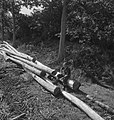 Bosbewerking, arbeiders, boomstammen, zitten, Bestanddeelnr 253-5816.jpg