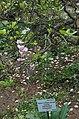 BotGardenFomin DSC 0254-1.jpg