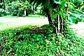Botanic garden limbe29.jpg