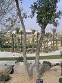 Botanical garden of Barcelona - 2004 - 14.JPG