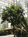 Botanischer Garten 24.07.2012 - panoramio (1).jpg