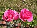 Both flowers loves.jpg
