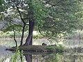 Branitzer Park, Kastanienallee, 03042 Cottbus, Germany - panoramio - Eugeniy Meshcheryako… (1).jpg