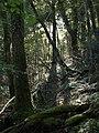 Bremridge Wood - geograph.org.uk - 576455.jpg