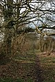 Bridleway to Croome Perry Wood - geograph.org.uk - 341638.jpg