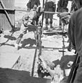 British Forces in the Middle East, 1945-1947 E32042.jpg