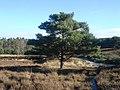Brunssummerheide - panoramio.jpg
