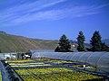 Buchholz März - panoramio.jpg