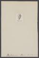 Bulimina obliqua - - Print - Iconographia Zoologica - Special Collections University of Amsterdam - UBAINV0274 007 04 0033.tif