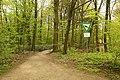 Burgsteinfurt Naturschutzgebiet Am Bagno Buchenberg 01.jpg
