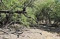 Butcher Jones Trail, Burro Cove and Beyond, Tonto National Park, Arizona - panoramio (35).jpg