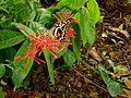 Butterfly at Wankam Beach Farm.jpg
