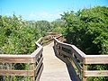 CNS Turtle Mound boardwalk07.jpg