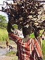 COSV - Sud Sudan 2007 - Women gathering wood 1.jpg