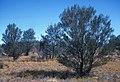 CSIRO ScienceImage 1265 Australian Landscape.jpg