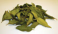 CSIRO ScienceImage 3903 Dried Lemon Myrtle Leaves Backhousia citriodora.jpg
