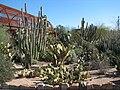 Cacti, Desert Botanical Garden.jpg