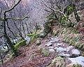 Caledonian Forest Walk - geograph.org.uk - 112912.jpg