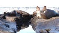 File:California sea lion colony in La Jolla (70488).webm