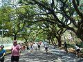 Caminhada no Parque do Ibirapuera.JPG
